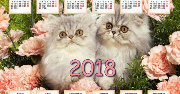 Agenda papier physique kitsch avec des chatons, la poste 2018